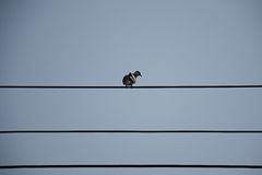 Líneas eléctricas de la isla de la paloma Foto de archivo