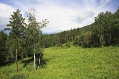 Líneas eléctricas en las montañas de Altai Fotos de archivo libres de regalías