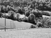 Líneas eléctricas y árboles blancos y negros Imagenes de archivo