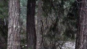 Líneas eléctricas y borde del bosque con la nieve que cae en invierno metrajes