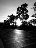 Líneas y árbol del tráfico Rebecca 36 Imagen de archivo