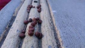 Líneas y semillas angulosas HI Fotos de archivo libres de regalías