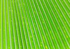 Líneas y texturas de hojas de palma verdes Imagen de archivo libre de regalías