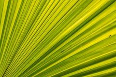 Líneas y texturas verdes de las hojas de palma foto de archivo libre de regalías