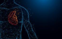 Líneas y triángulos humanos, red de conexión de la forma de la anatomía del corazón del punto en fondo azul ilustración del vector