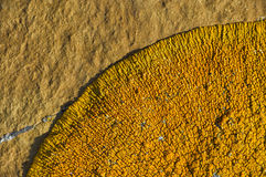 Líquene de Orance no pedregulho Foto de Stock Royalty Free