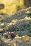 Líquene e fungos Foto de Stock