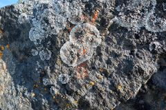 Líquene e musgo em pedras Fotografia de Stock