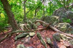 Líquene em rochas com luz solar dappled fotos de stock