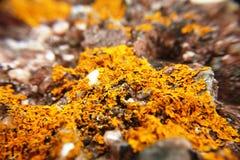 Líquene em rochas no ponto Escócia de Ardmore imagem de stock