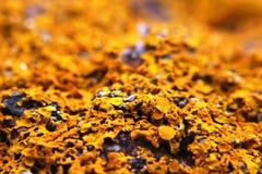 Líquene em rochas no ponto Escócia de Ardmore foto de stock