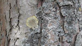 Líquene na casca de uma árvore Imagens de Stock