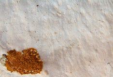 Líquene na pedra calcária Imagem de Stock Royalty Free