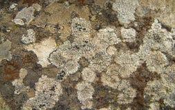 Líquene na rocha velha Fotos de Stock