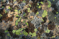 Líquene no granito Fotografia de Stock