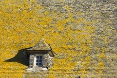 Líquene no telhado Imagem de Stock Royalty Free