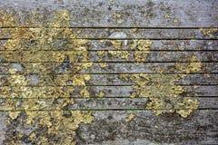 Líquene seco em um banco velho Fotografia de Stock Royalty Free