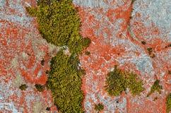 Líquenes coloridos em Nova Zelândia Fotos de Stock