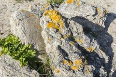 Líquenes em uma rocha cinzenta Foto de Stock Royalty Free