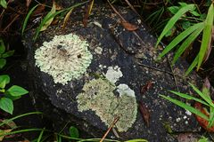 Líquenes, musgos e flora na floresta tropical natural foto de stock royalty free