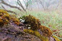 Líquenes, musgos e flora na floresta tropical natural imagens de stock