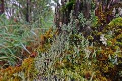 Líquenes, musgos e flora na floresta tropical natural foto de stock