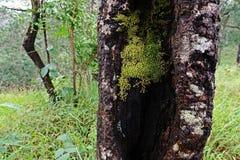 Líquenes, musgos e flora na floresta tropical natural imagem de stock