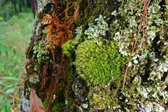 Líquenes, musgos e flora na floresta tropical natural fotos de stock