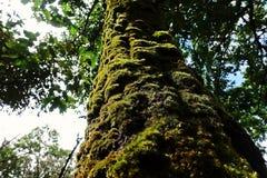 Líquenes, musgos e flora na floresta tropical natural imagem de stock royalty free