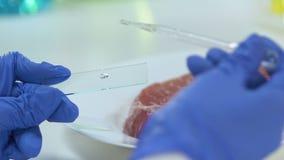 Líquido de gotejamento do cientista no vidro, parte de carne no fundo, bacteriologia filme