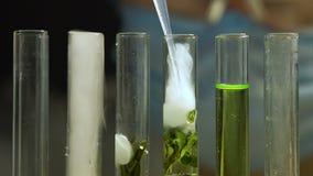 Líquido de gotejamento perito do laboratório nos tubos de ensaio com amostra da planta, extrato natural vídeos de arquivo