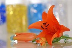 Lírio alaranjado com um remédio para a terapia do aroma Fotos de Stock Royalty Free