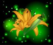 Lírio bonito das flores Fotografia de Stock Royalty Free