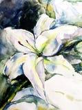 Lírio claro delicado da flor branca do sumário do fundo da arte da aquarela único ilustração royalty free