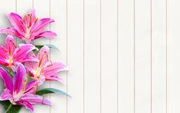 Lírio cor-de-rosa em de madeira Imagens de Stock Royalty Free