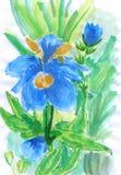 Lírio da cor de água da ilustração Ilustração Royalty Free