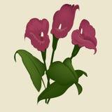 Lírio da flor Fotos de Stock Royalty Free