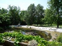 Lírio da lagoa e de água Fotografia de Stock Royalty Free