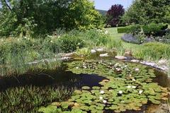 Lírio da lagoa e de água Imagens de Stock Royalty Free