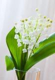 Lírio das flores do vale imagem de stock