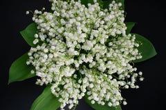 L?rio das flores do vale em um fundo preto 5 imagem de stock