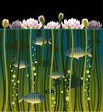 Lírio de água e os peixes Imagem de Stock Royalty Free
