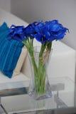 Lírio de Calla azul do falso Fotografia de Stock Royalty Free