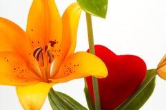 Lírio e amor Imagens de Stock Royalty Free