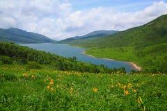 Lírio e lago de dia Foto de Stock