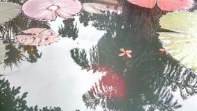 Lírio na água Foto de Stock Royalty Free