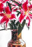 Lírio oriental, sonhador do cernuum do Lilium Fotografia de Stock Royalty Free