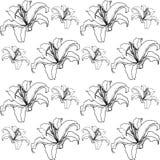 Lírios bonitos Floresce preto-branco, sumário foto de stock royalty free