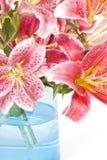 Lírios cor-de-rosa Imagem de Stock