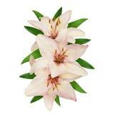 Lírios cor-de-rosa e brancos Imagem de Stock Royalty Free